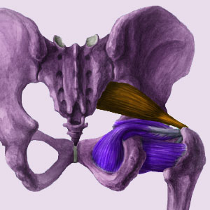 Cycling Piriformis Syndrome