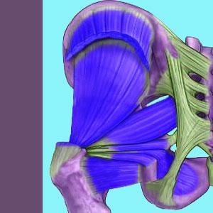 Piriformis MRI