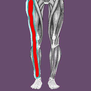 Short leg piriformis pain